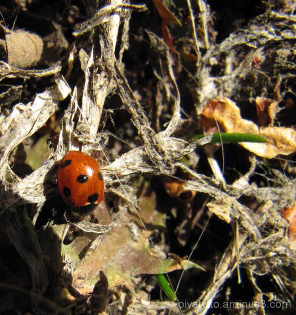 We spotted the first Ladybug!