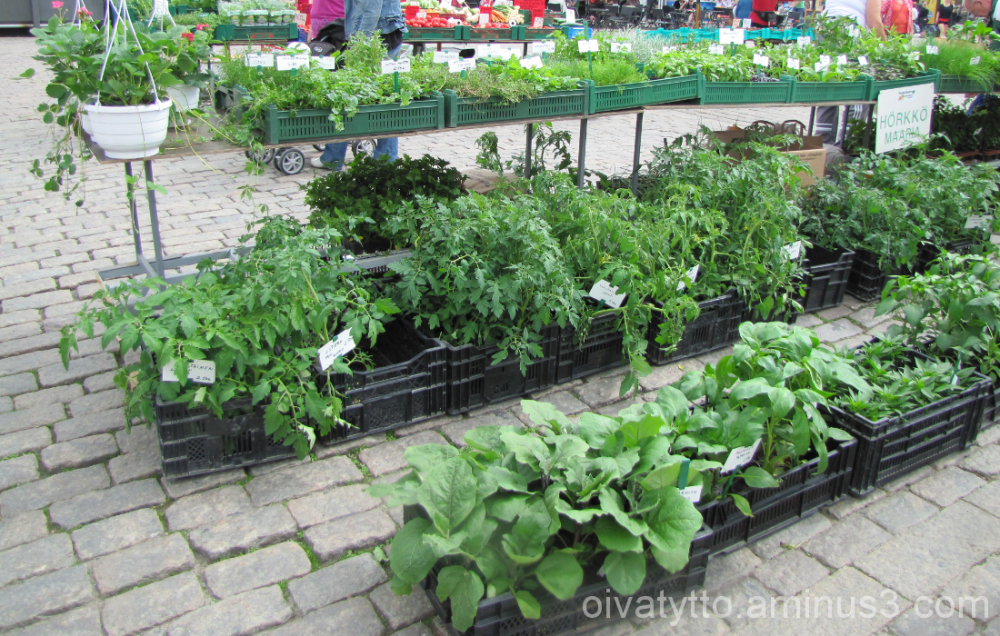 Of crop plants sale!
