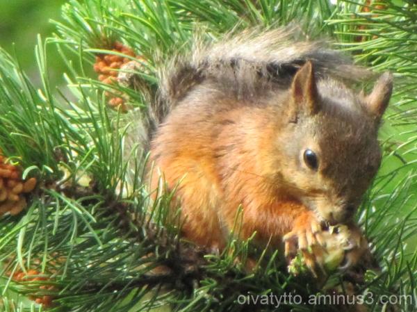 Squirrel breakfast!