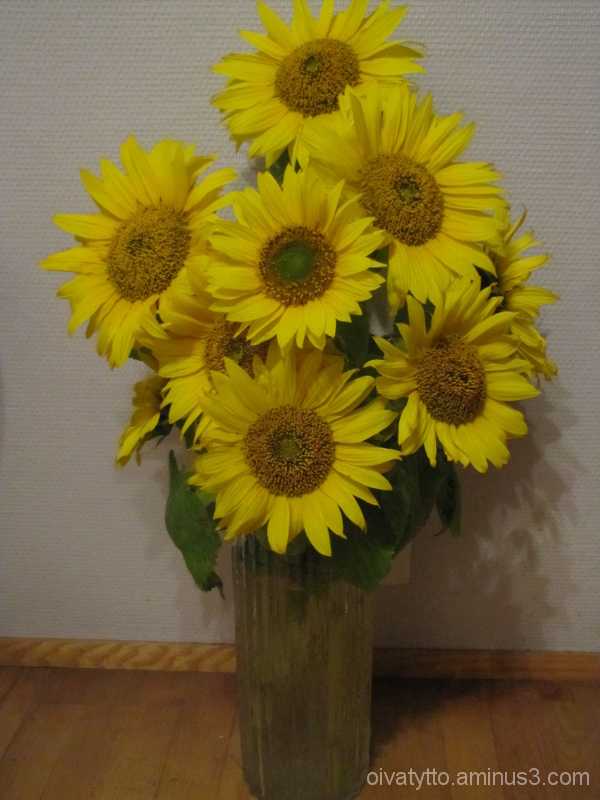 Sunflowers in our house!