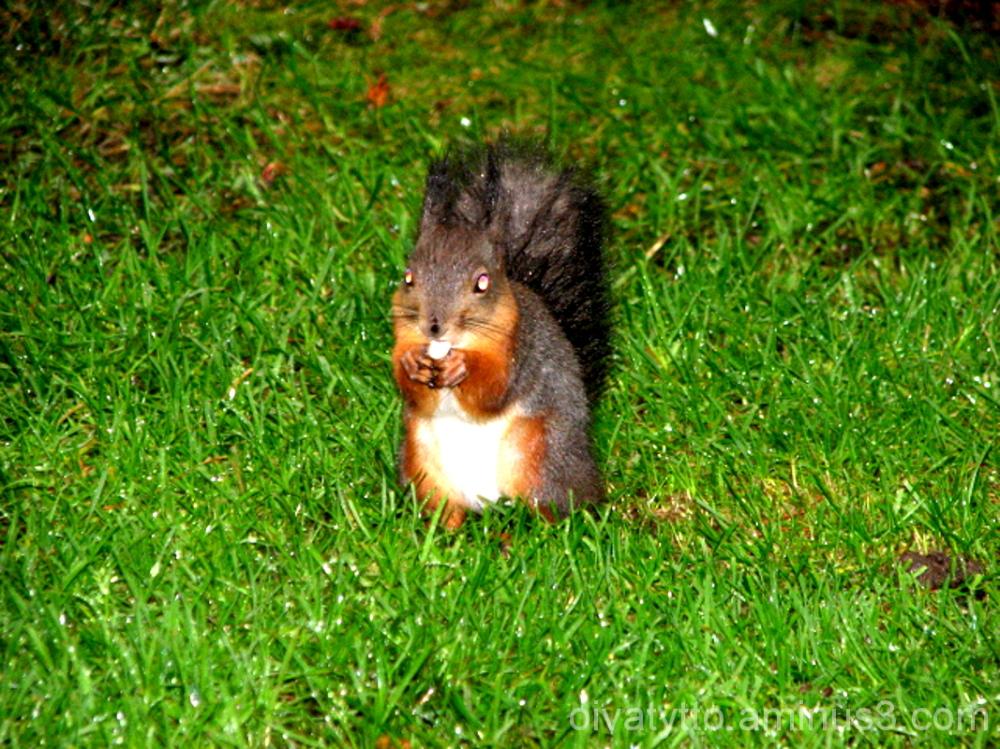 Halloween Squirrel 2.11.12!