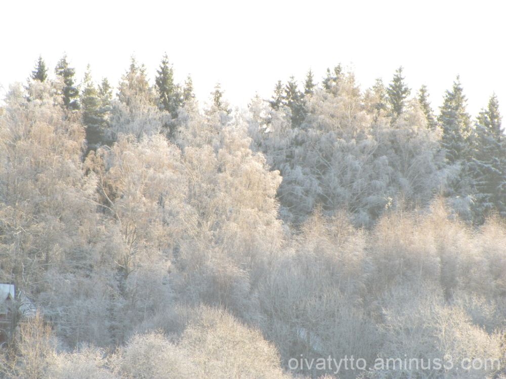 The beauty of the trees in cold weather!
