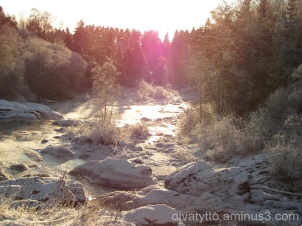 Nautelankoski bathed in sunlight!