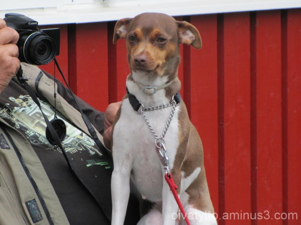 Fancy Dog Roosa!