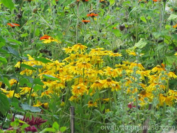 Autumn yellow hues 1/7