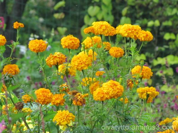 Autumn yellow hues 3/7