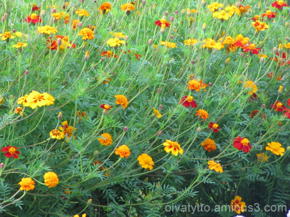 Autumn yellow hues 4/7