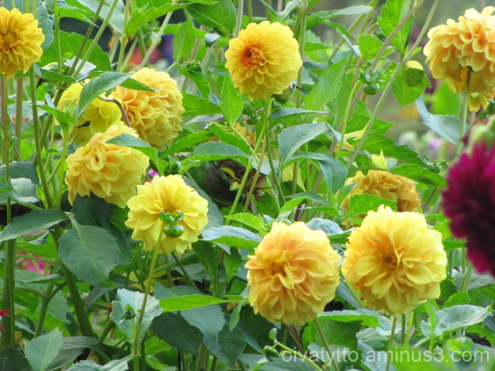 Autumn yellow hues 5/7