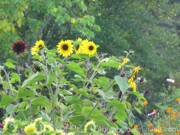 Autumn yellow hues 6/7