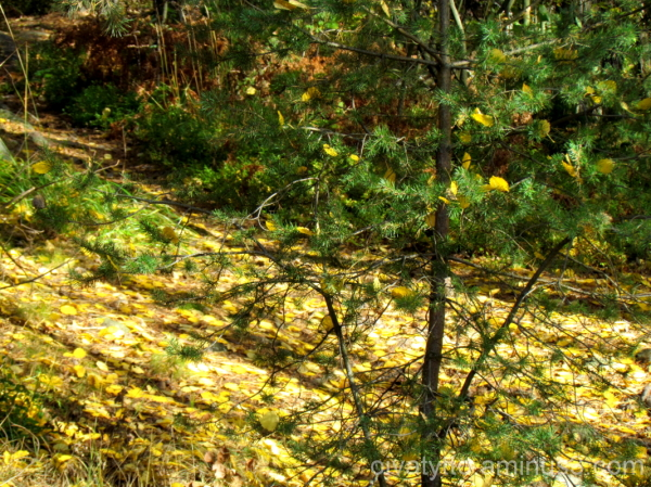 Autumn in the forest 5/7
