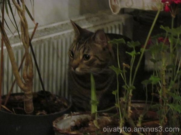 Kaapo ruler of the jungle!
