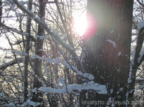 Winter sun!