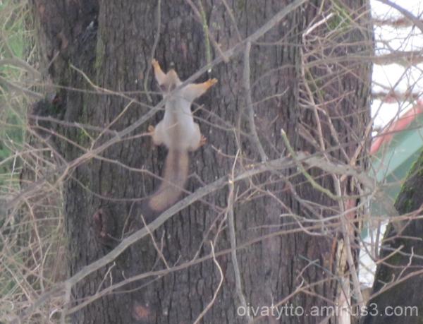 Little squirrel climbs!