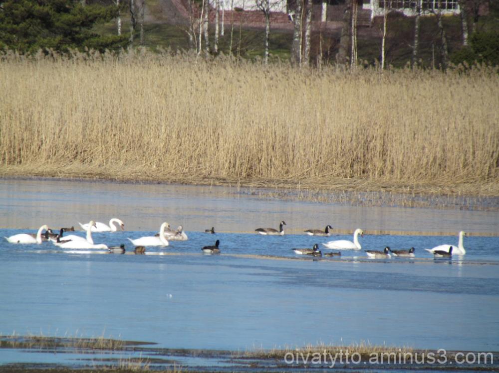 Migratory birds return started!