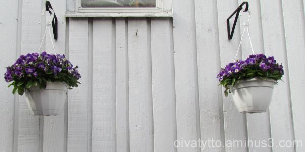 Violets 2/4!