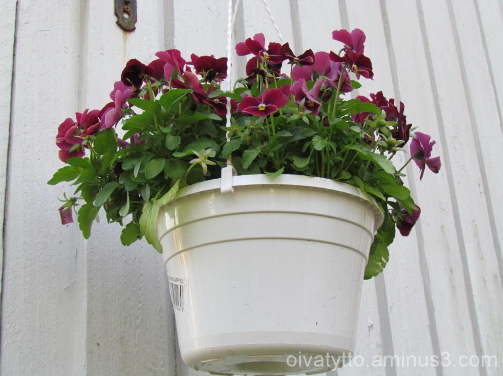 violets 3/4!