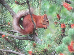 Squirrel youngster!