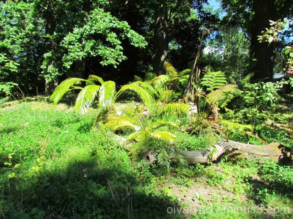 Plants of the dinosaurs era!