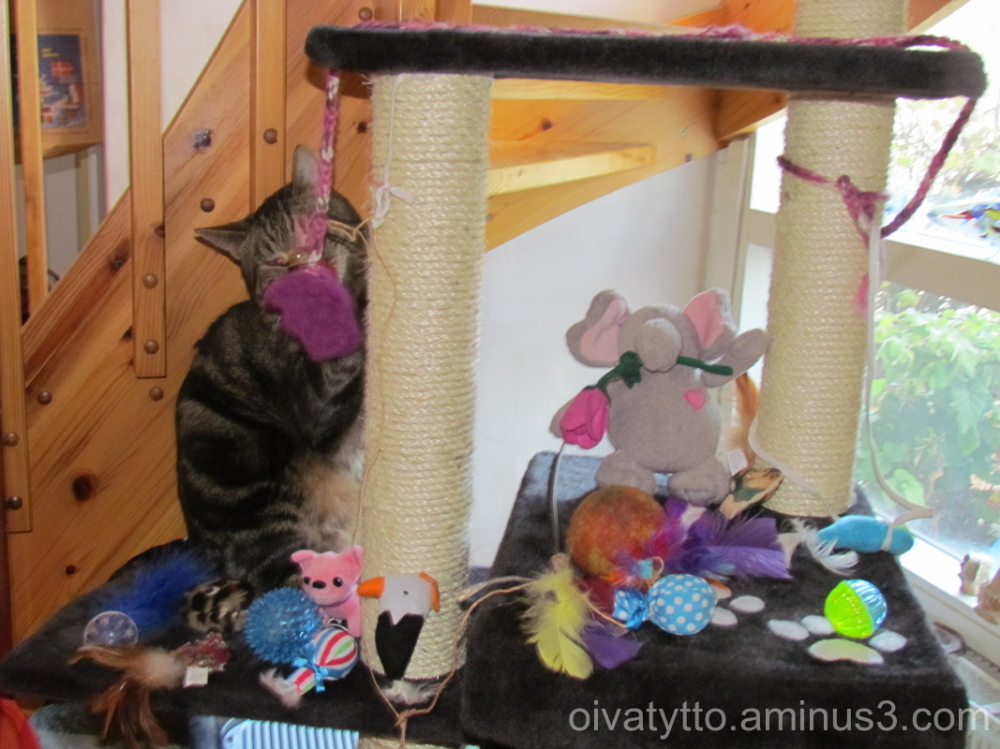 Leevi and his toys!