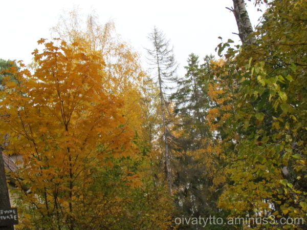 Glowing autumn colors!