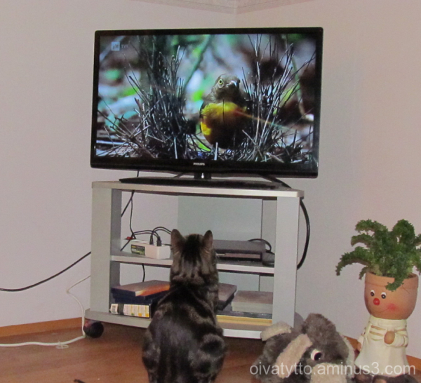TV's nature programs is of interesting!