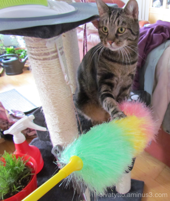 Leevi will help clean up the mess!