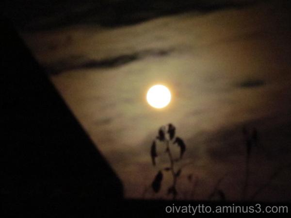 Of May full moon!