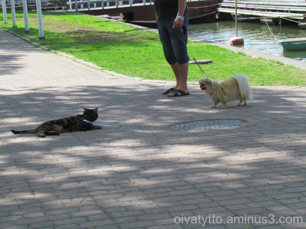 Naantali trip we met many dogs!