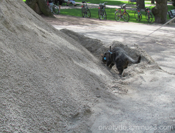 Wow what a handsome pile of sand!