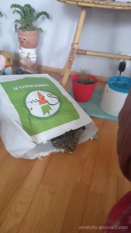 Leevi loves paper bags!