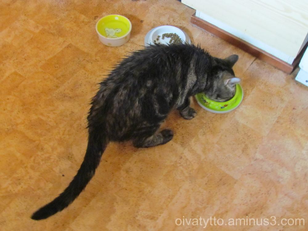 Wet cat!