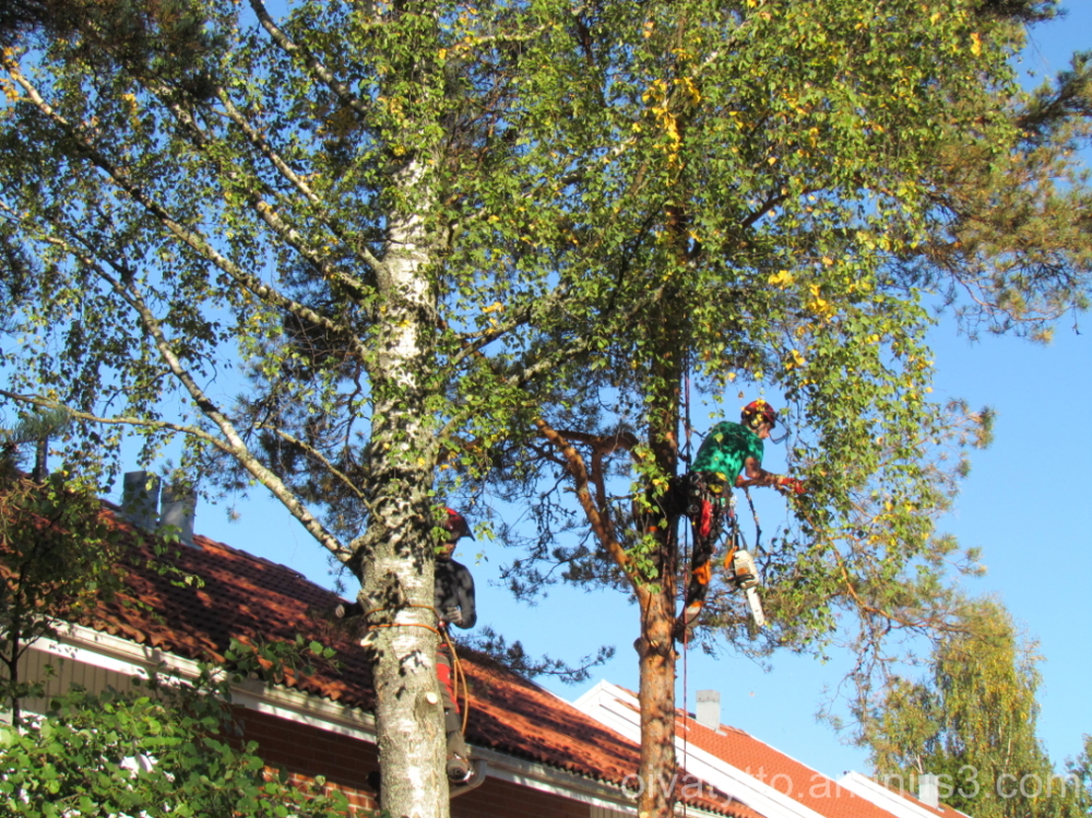 Lumberjacks at work 2