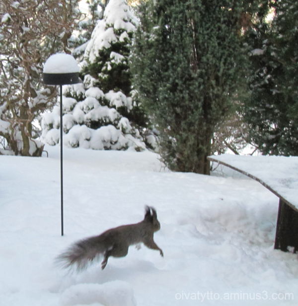 For winter pleasure!