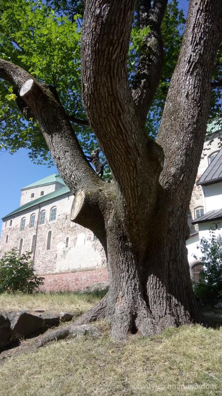 Small cat, big tree.