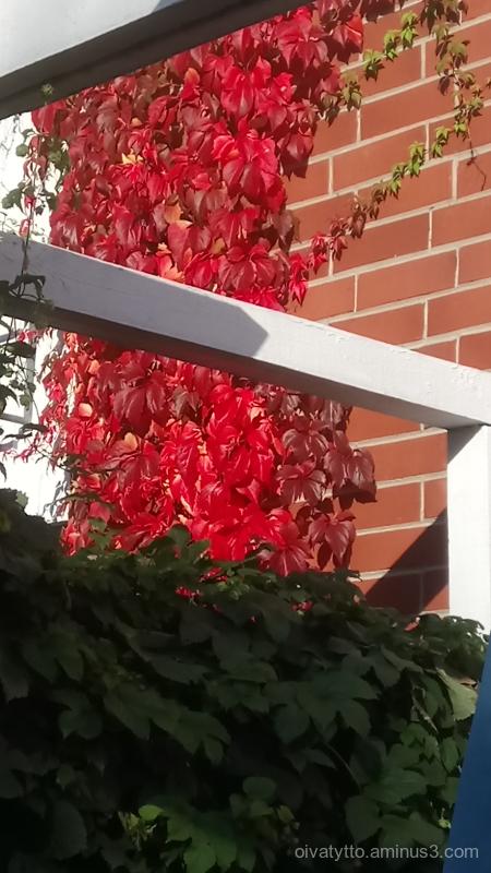 Autumn colors 2.