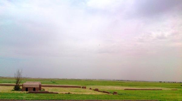 farm, green farm, landscape