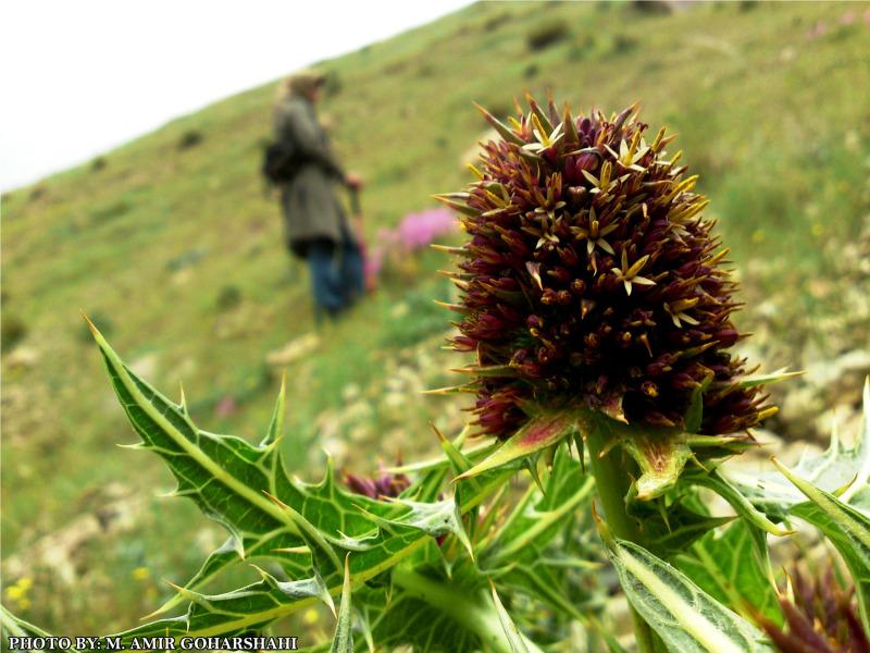 Prick   wallpaper   nature  Amir Goharshahi