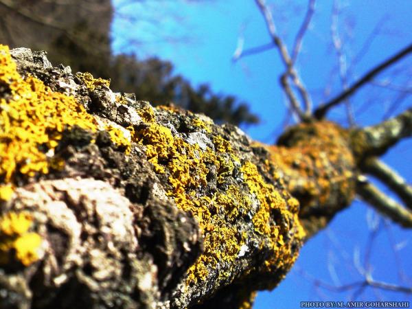 tree yellow wallpaper sky Amir Goharshahi