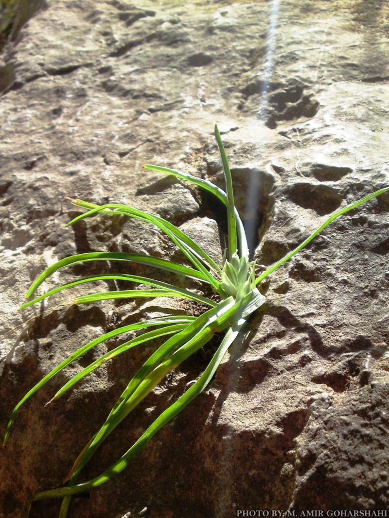 wind rock green leaf wallpaper Amir Goharshahi