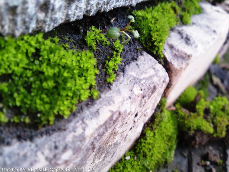 Green fresh wallpaper life Amir Goharshahi