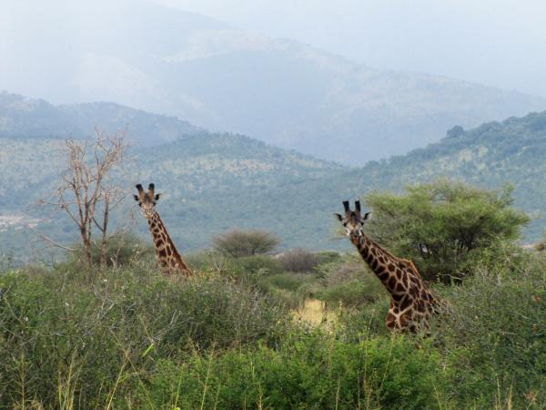 MANYARA NATIONAL PARK  - TANZANIA - (2/8)