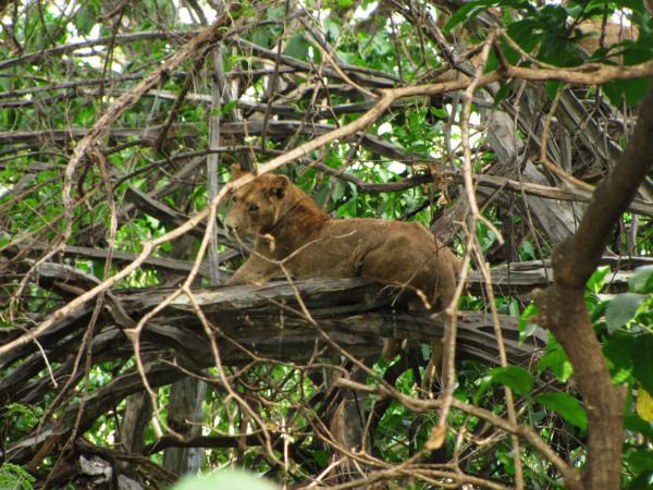 MANYARA NATIONAL PARK  - TANZANIA - (8/8)