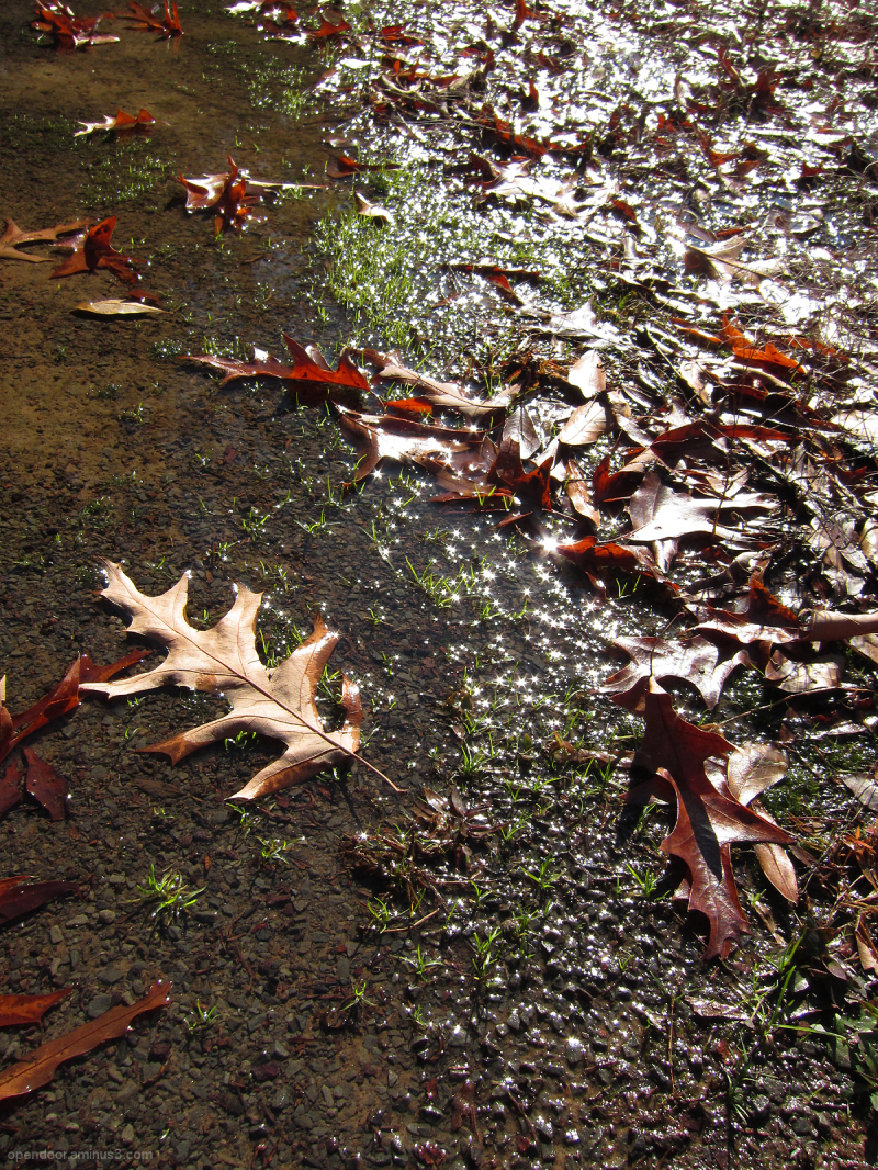 Leaf, fall, puddle, water, sparkle, seasons.