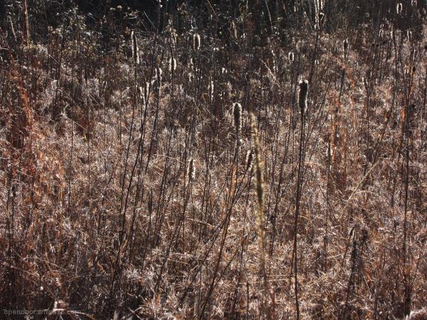 Prairie, landscape, sunlight, grasses, stalks.