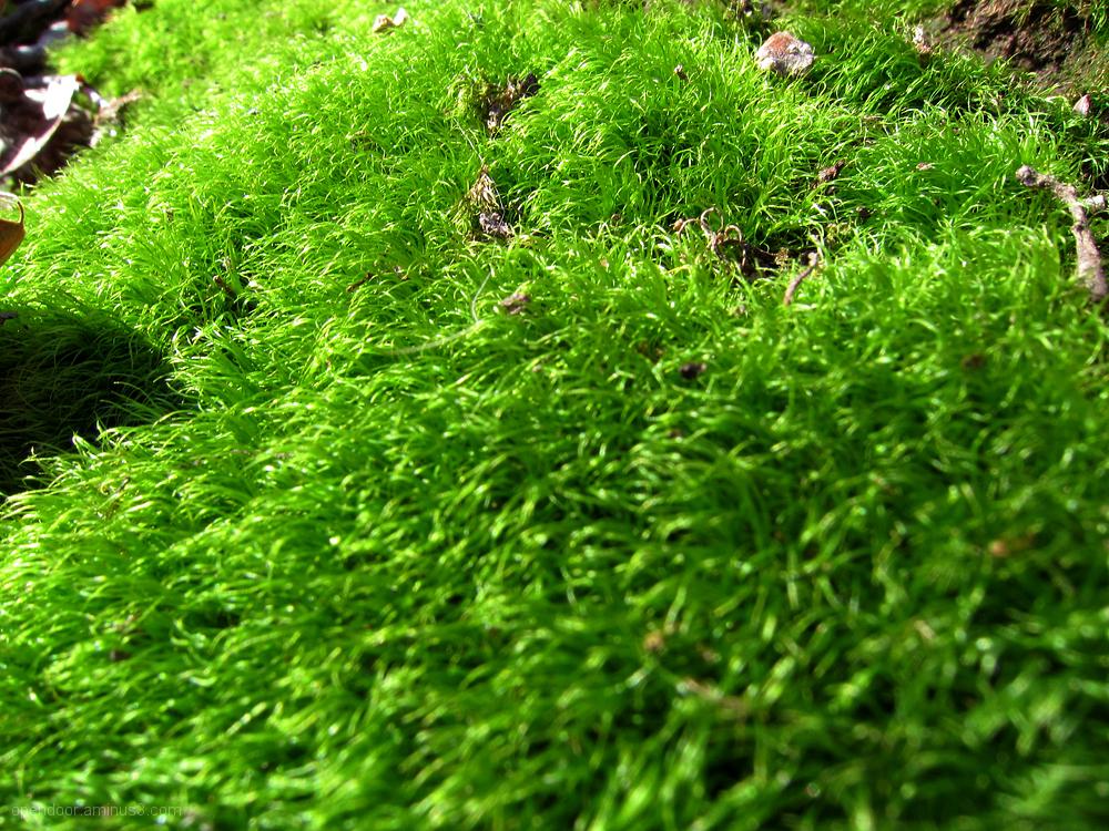 Moss, macro, nature, tree, landscape, green.