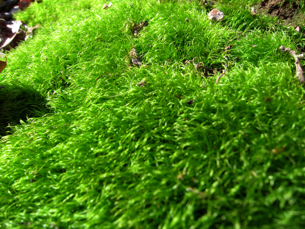 Moss, macro, nature, tree, landscape, green.