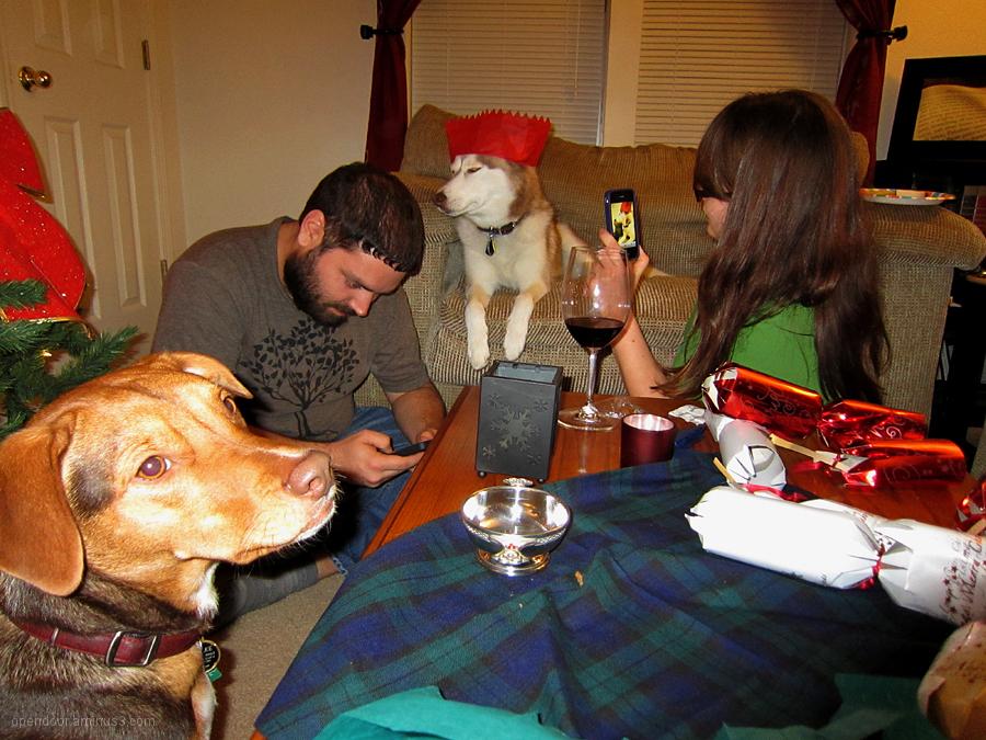 Party, dogs, people, Christmas, tartan, drinks.
