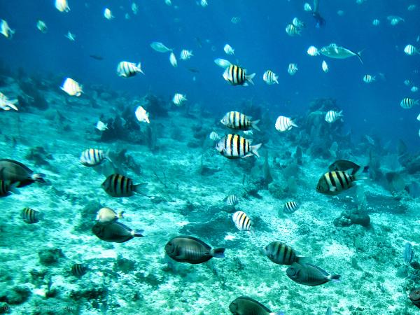 Paradise Reef...