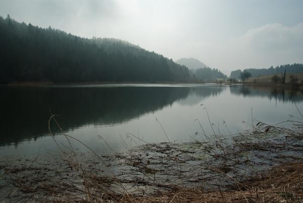 Les étangs marrons