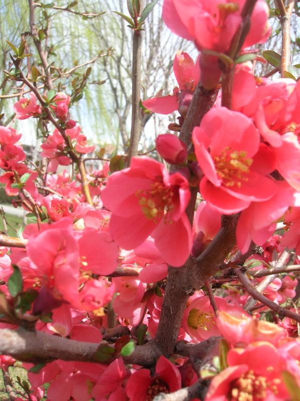 spring, Tehran